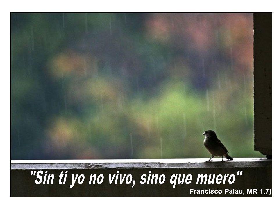 Francisco Palau, MR 1,7)