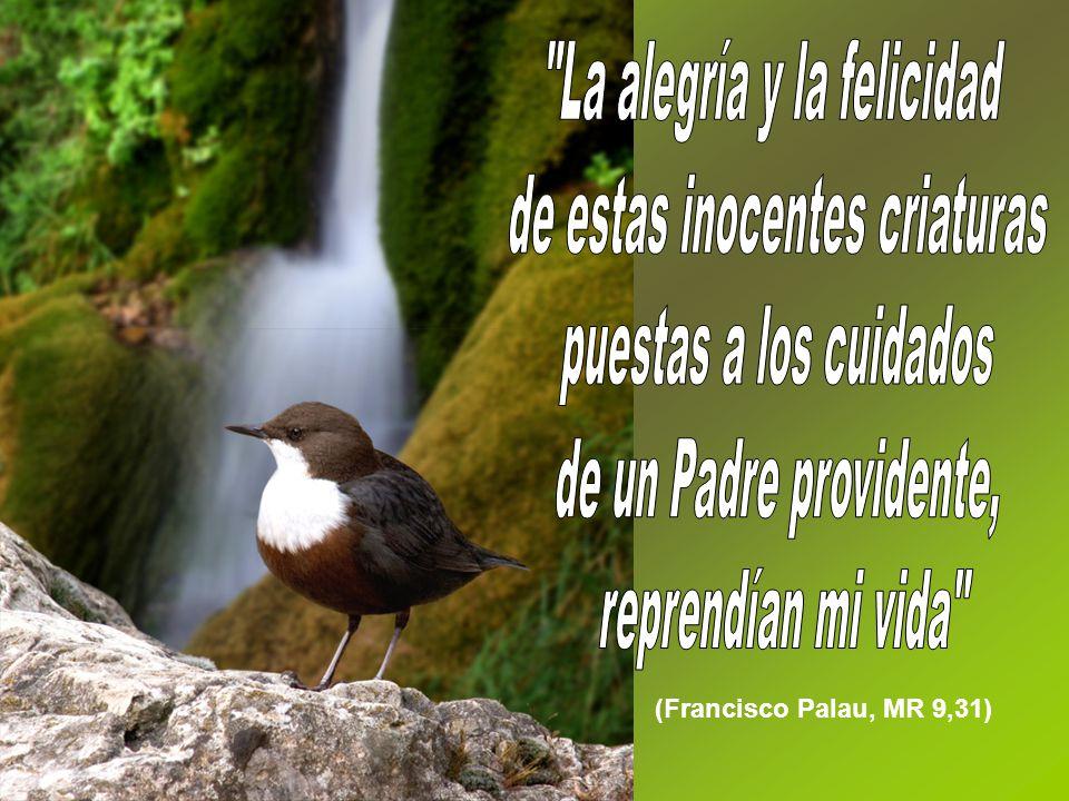 (Francisco Palau, MR 9,31)