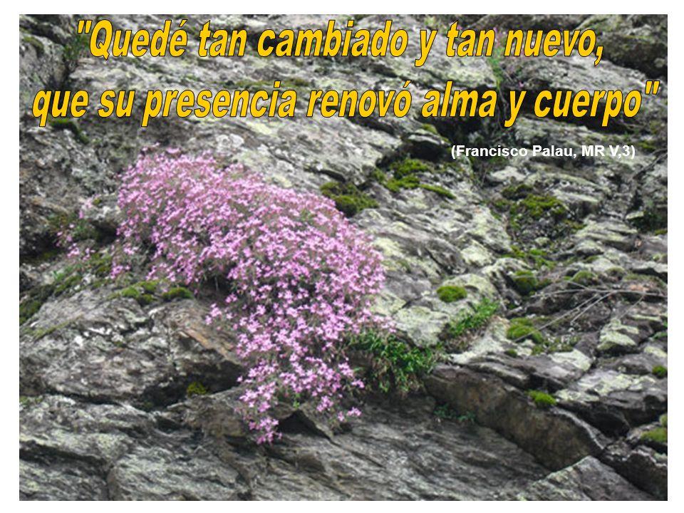 (Francisco Palau, MR V,3)