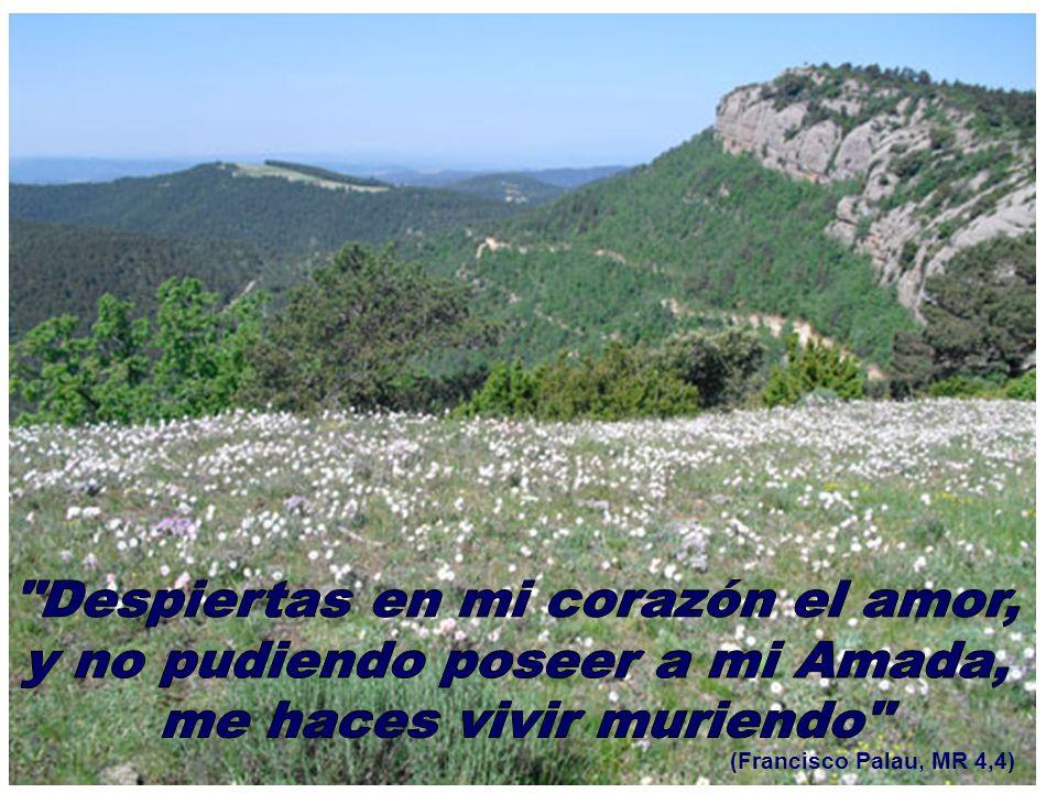(Francisco Palau, MR 4,4)
