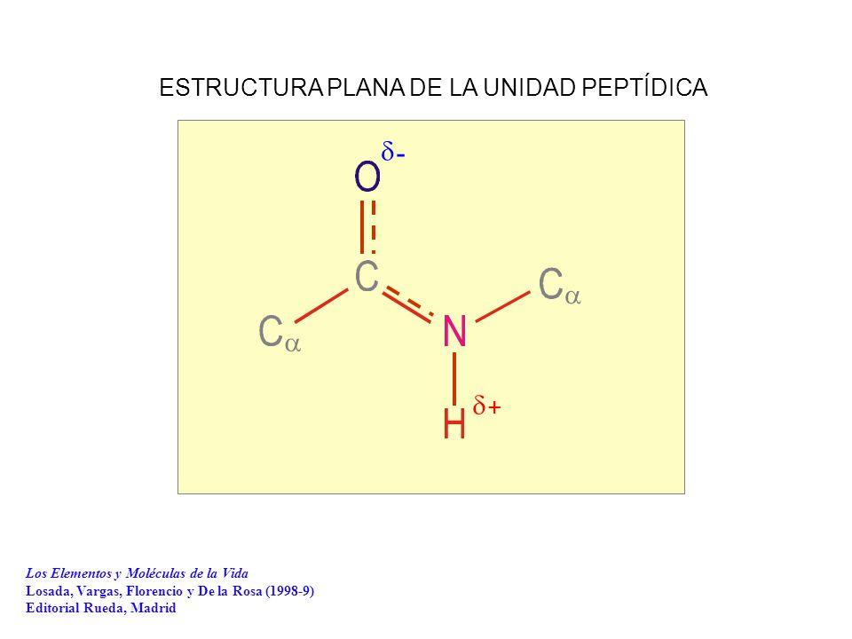     - + ESTRUCTURA PLANA DE LA UNIDAD PEPTÍDICA Los Elementos y Moléculas de la Vida Losada, Vargas, Florencio y De la Rosa (1998-9) Editorial Rueda, Madrid