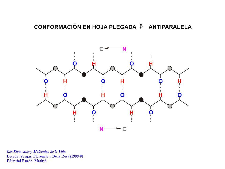 CONFORMACIÓN EN HOJA PLEGADA ANTIPARALELA OO OO OH HH HHHHH HH HH HO OO OOOOO N C C N  Los Elementos y Moléculas de la Vida Losada, Vargas, Florencio y De la Rosa (1998-9) Editorial Rueda, Madrid