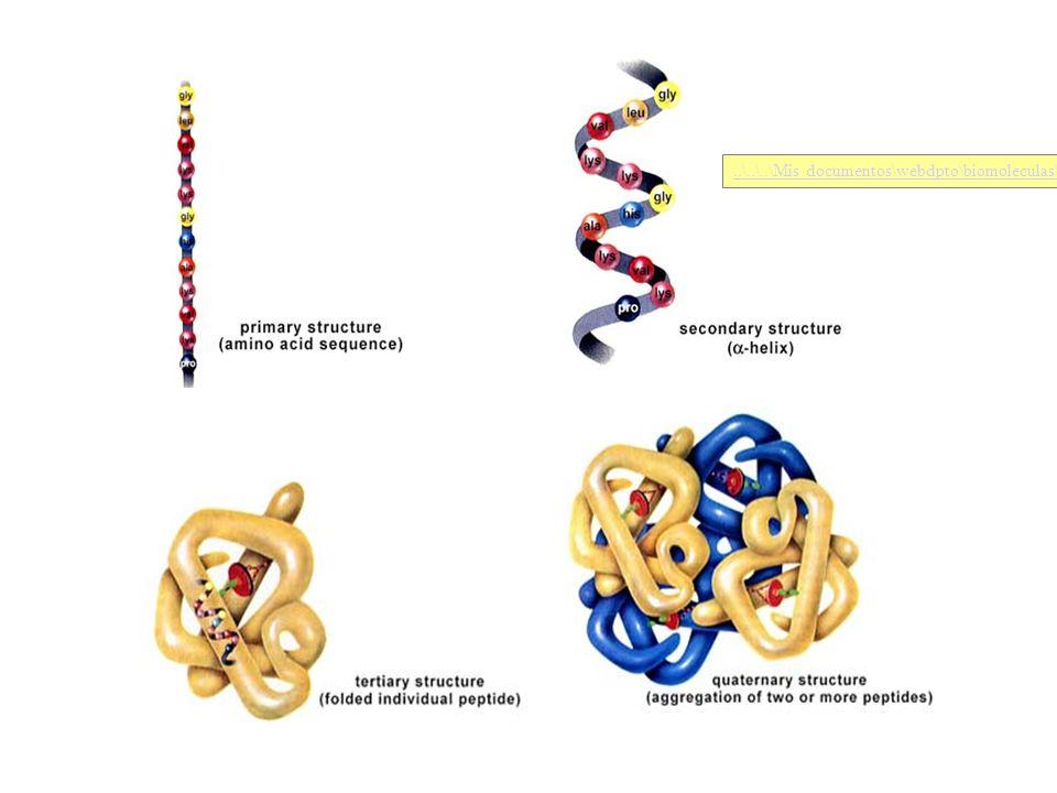 ..\..\..\Mis documentos\webdpto\biomoleculas\biomodel\model1\INICIO.HTM