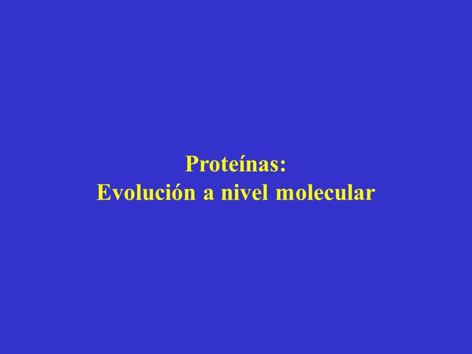 Proteínas: Evolución a nivel molecular