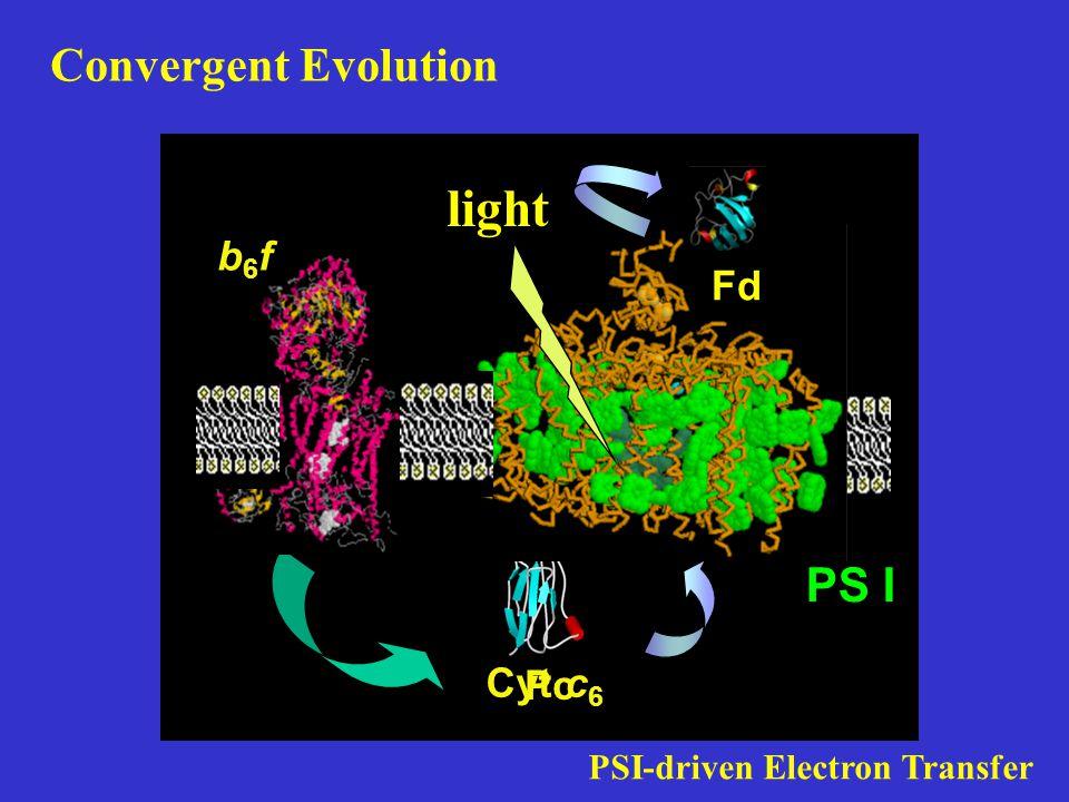 Cyt c 6 Pc PS I b6fb6f PSI-driven Electron Transfer Fd light Convergent Evolution