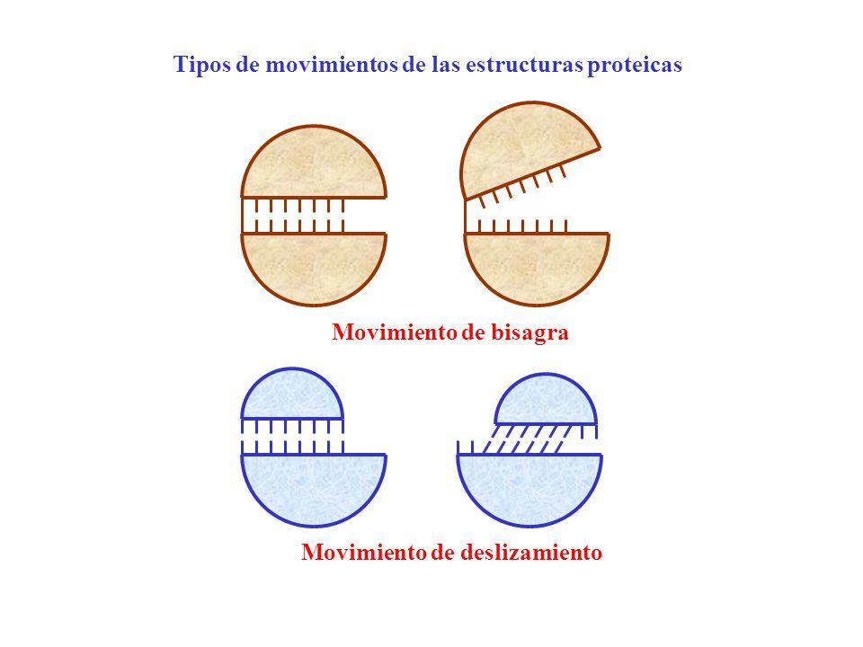 Movimiento de bisagra Movimiento de deslizamiento Tipos de movimientos de las estructuras proteicas