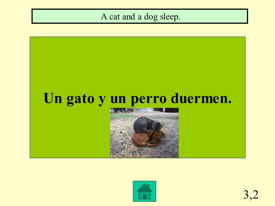 3,1 Un hombre duerme. A man sleeps.