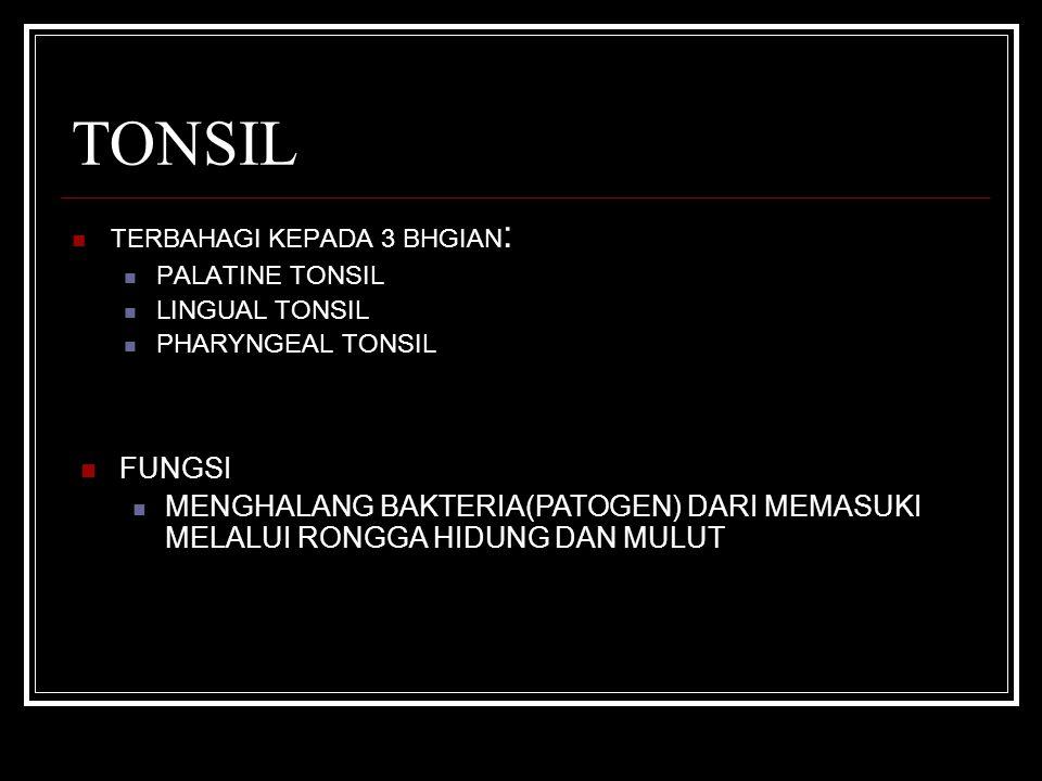 TONSIL TERBAHAGI KEPADA 3 BHGIAN : PALATINE TONSIL LINGUAL TONSIL PHARYNGEAL TONSIL FUNGSI MENGHALANG BAKTERIA(PATOGEN) DARI MEMASUKI MELALUI RONGGA HIDUNG DAN MULUT