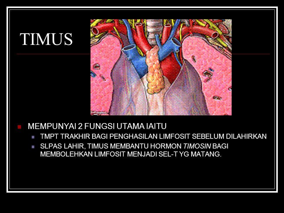 TIMUS MEMPUNYAI 2 FUNGSI UTAMA IAITU TMPT TRAKHIR BAGI PENGHASILAN LIMFOSIT SEBELUM DILAHIRKAN SLPAS LAHIR, TIMUS MEMBANTU HORMON TIMOSIN BAGI MEMBOLEHKAN LIMFOSIT MENJADI SEL-T YG MATANG.