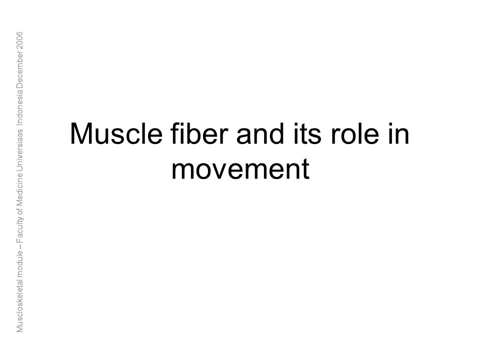 Muscloskeletal module – Faculty of Medicine Universiaas Indonesia December 2006 Muscle fiber and its role in movement