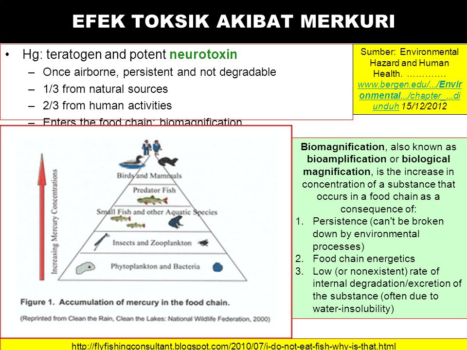 EFEK TOKSIK AKIBAT MERKURI Hg: teratogen and potent neurotoxin –Once airborne, persistent and not degradable –1/3 from natural sources –2/3 from human activities –Enters the food chain: biomagnification Sumber: Environmental Hazard and Human Health.