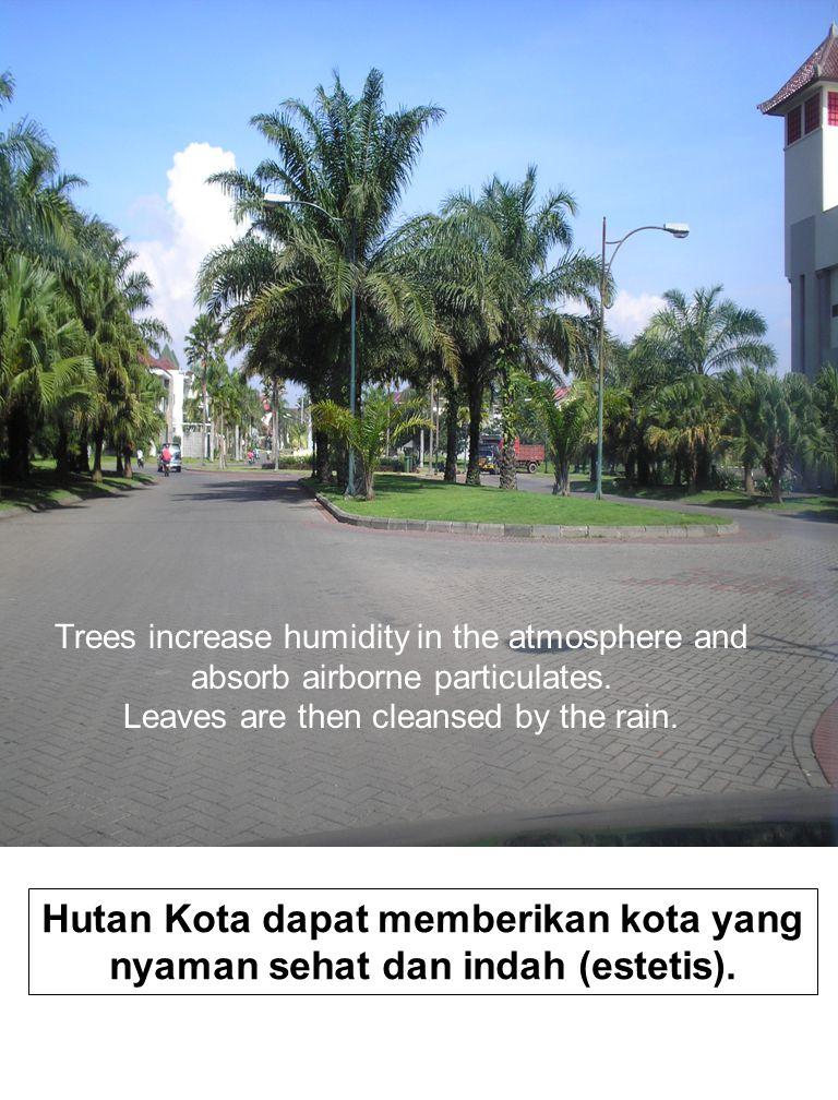 Hutan Kota dapat memberikan kota yang nyaman sehat dan indah (estetis).
