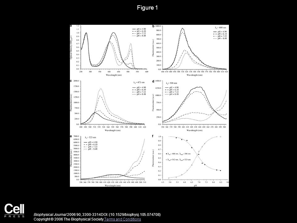 Figure 2 Biophysical Journal 2006 90, 3300-3314DOI: (10.1529/biophysj.105.074708) Copyright © 2006 The Biophysical Society Terms and Conditions Terms and Conditions