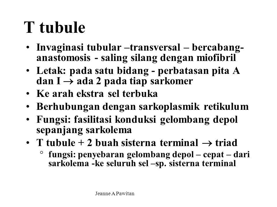 Jeanne A Pawitan T tubule Invaginasi tubular –transversal – bercabang- anastomosis - saling silang dengan miofibril Letak: pada satu bidang - perbatasan pita A dan I  ada 2 pada tiap sarkomer Ke arah ekstra sel terbuka Berhubungan dengan sarkoplasmik retikulum Fungsi: fasilitasi konduksi gelombang depol sepanjang sarkolema T tubule + 2 buah sisterna terminal  triad °fungsi: penyebaran gelombang depol – cepat – dari sarkolema -ke seluruh sel –sp.