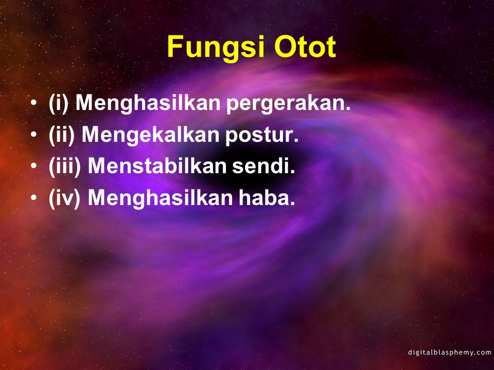 Fungsi Otot (i) Menghasilkan pergerakan. (ii) Mengekalkan postur.