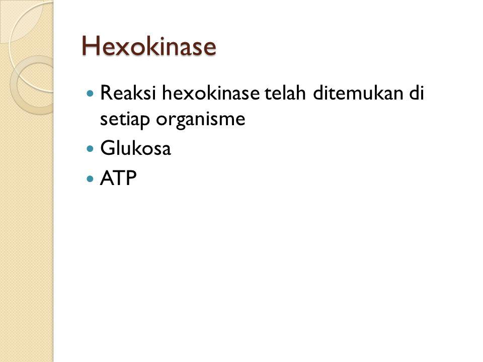 Hexokinase Reaksi hexokinase telah ditemukan di setiap organisme Glukosa ATP