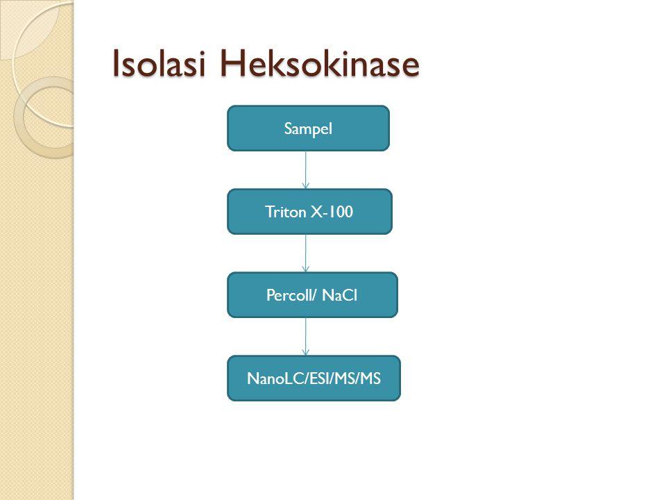 Isolasi Heksokinase Sampel Triton X-100 Percoll/ NaCl NanoLC/ESI/MS/MS