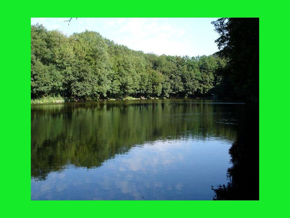 1. rybník