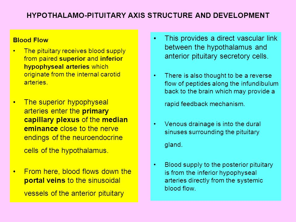 HYPOTHALAMO-PITUITARY AXIS STRUCTURE AND DEVELOPMENT Blood Flow The pituitary receives blood supply from paired superior and inferior hypophyseal arteries which originate from the internal carotid arteries.