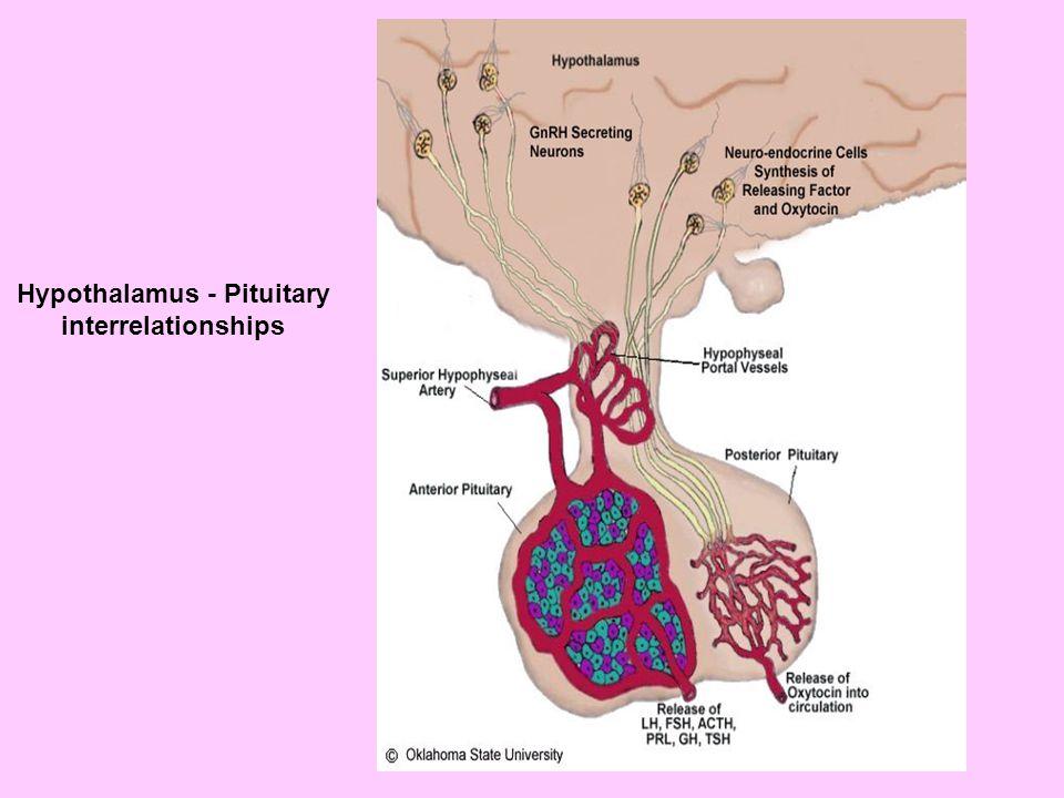 Hypothalamus - Pituitary interrelationships