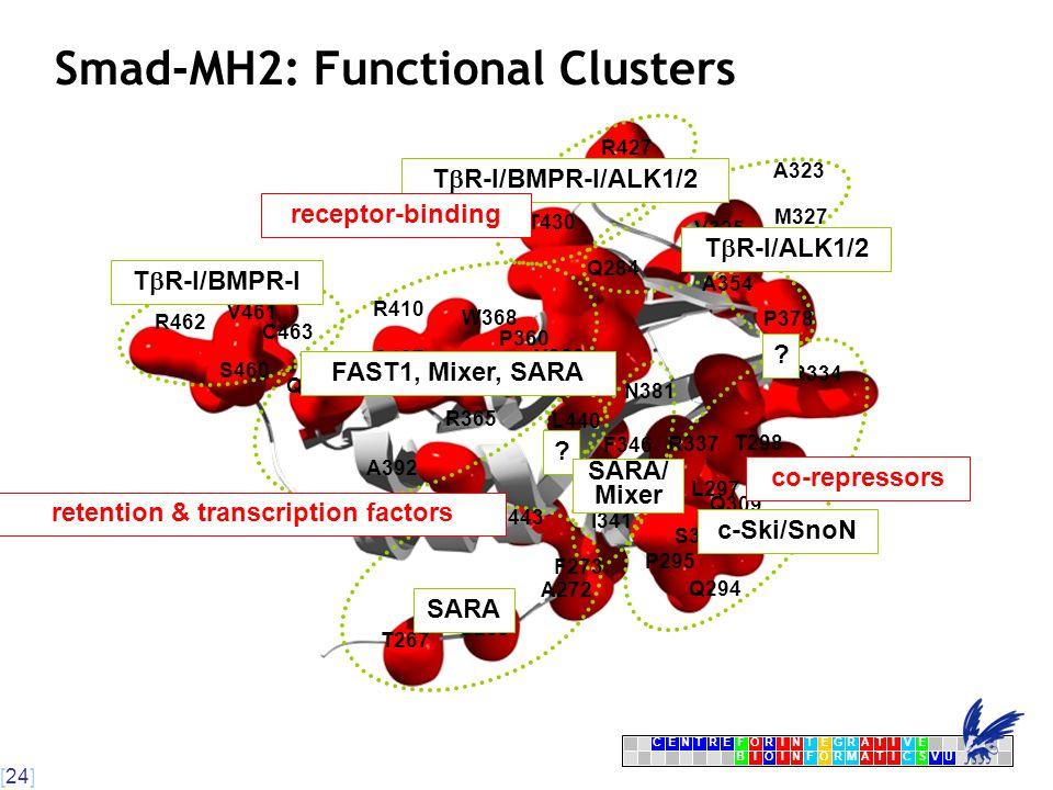 [24] CENTRFORINTEGRATIVE BIOINFORMATICSVU E Smad-MH2: Functional Clusters R462 C463 Q400 R410 W368 Y366 A392 S269 F273 N443 Q294 Q309 L297 L440 N381 A354 V461 S460 Q407 Q364 P360 R365 T267 A272 I341 P295 S308 T298 R337 F346 P378 Q284 V325 A323 R427 M327 T430 R334 FAST1, Mixer, SARA c-Ski/SnoN SARA T  R-I/ALK1/2 T  R-I/BMPR-I .