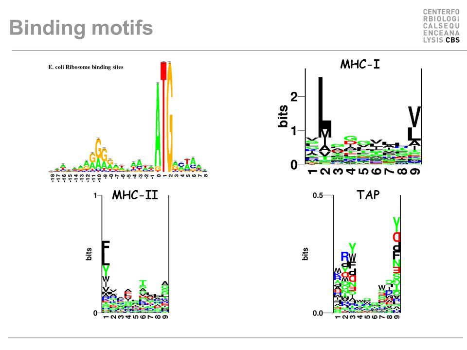 Binding motifs MHC-I TAPMHC-II