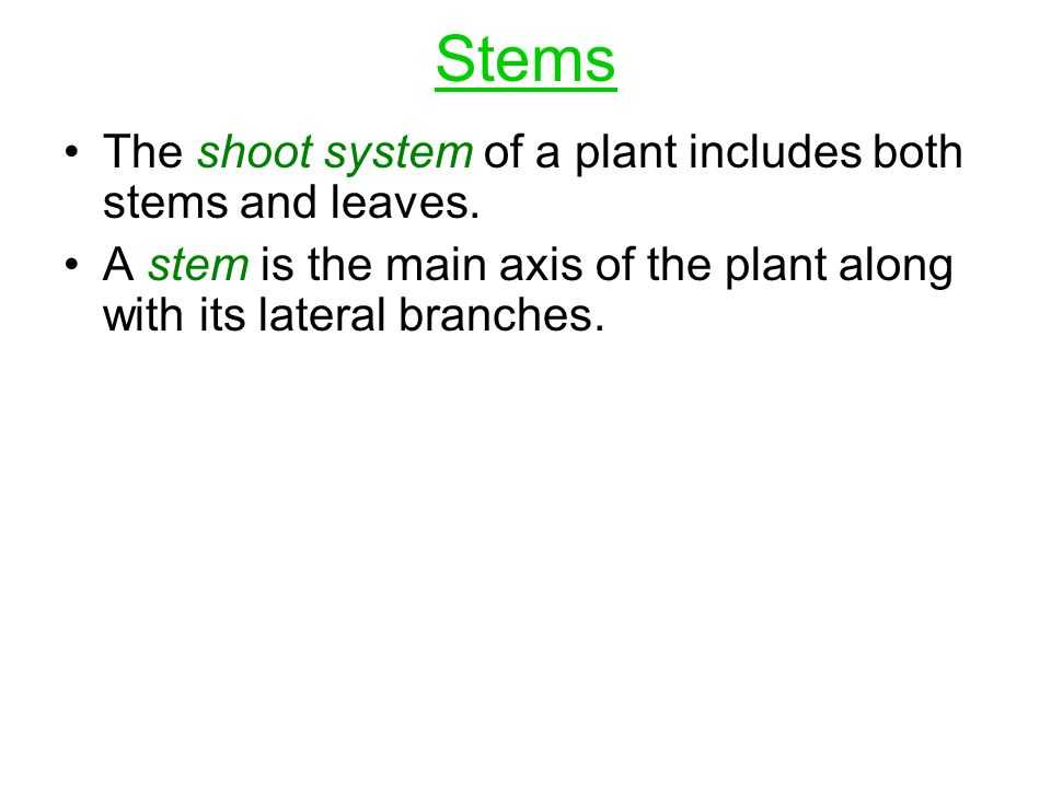 Stems The shoot system of a plant includes both stems and leaves. A stem is the main axis of the plant along with its lateral branches.