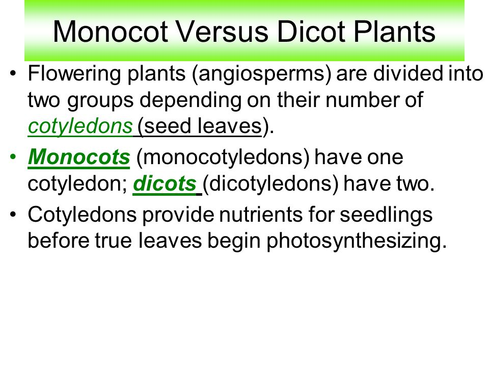 Monocot Versus Dicot Plants Flowering plants (angiosperms) are divided into two groups depending on their number of cotyledons (seed leaves). Monocots