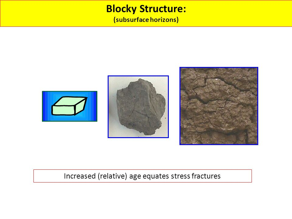 Blocky Structure: (subsurface horizons) Increased (relative) age equates stress fractures