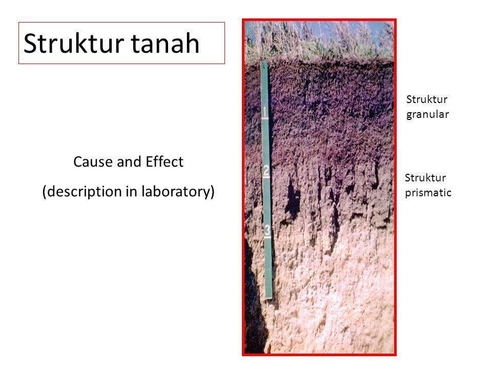 Struktur tanah Struktur granular Struktur prismatic Cause and Effect (description in laboratory)