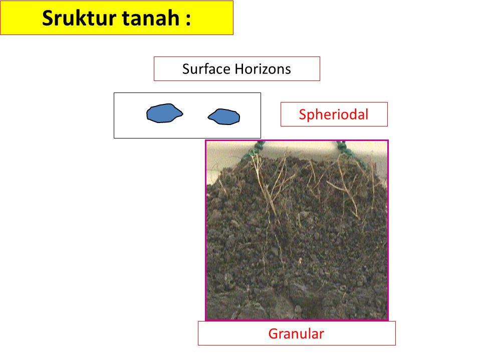 Spheriodal Granular Sruktur tanah : Surface Horizons
