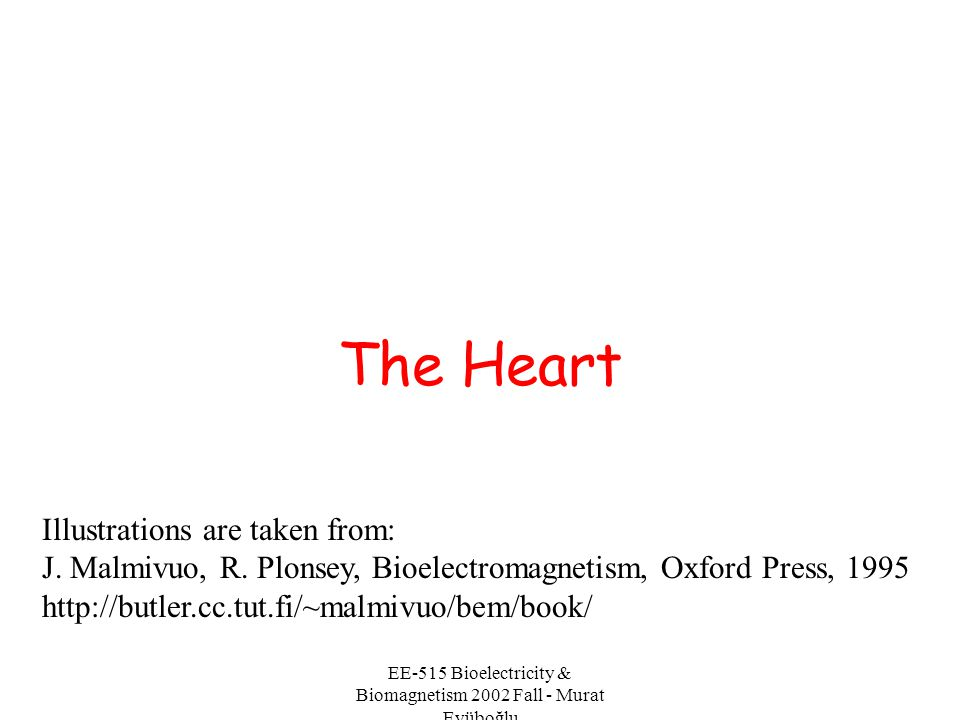 EE-515 Bioelectricity & Biomagnetism 2002 Fall - Murat Eyüboğlu Location of the Heart The heart is located in the chest between the lungs behind the sternum and above the diaphragm.