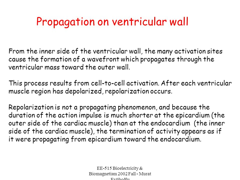 EE-515 Bioelectricity & Biomagnetism 2002 Fall - Murat Eyüboğlu From the inner side of the ventricular wall, the many activation sites cause the forma