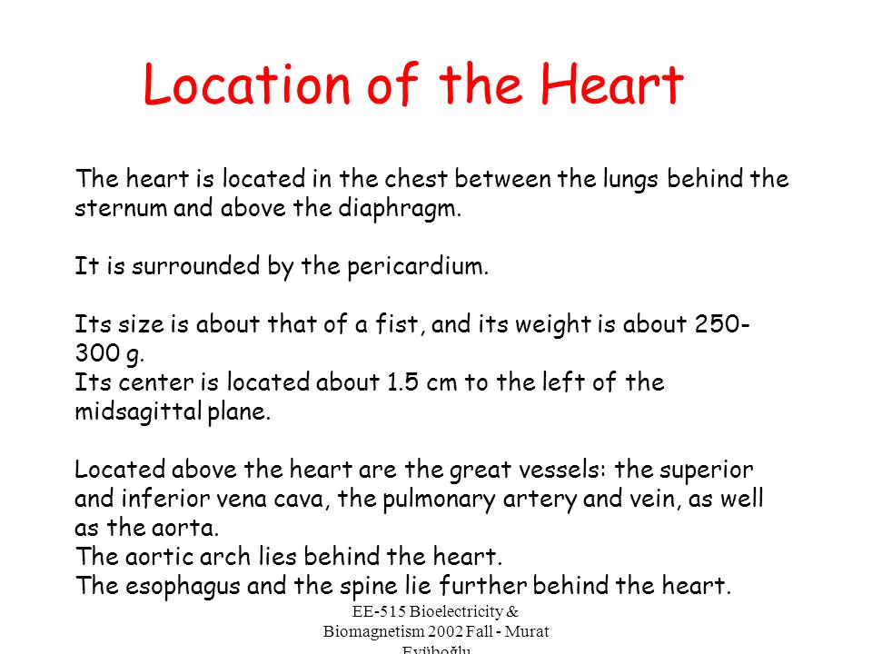 EE-515 Bioelectricity & Biomagnetism 2002 Fall - Murat Eyüboğlu Location of the Heart The heart is located in the chest between the lungs behind the s