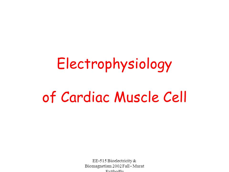 EE-515 Bioelectricity & Biomagnetism 2002 Fall - Murat Eyüboğlu Electrical activation of the Heart In the heart muscle cell, or myocyte, electric activation takes place by means of the same mechanism as in the nerve cell - that is, from the inflow of sodium ions across the cell membrane.
