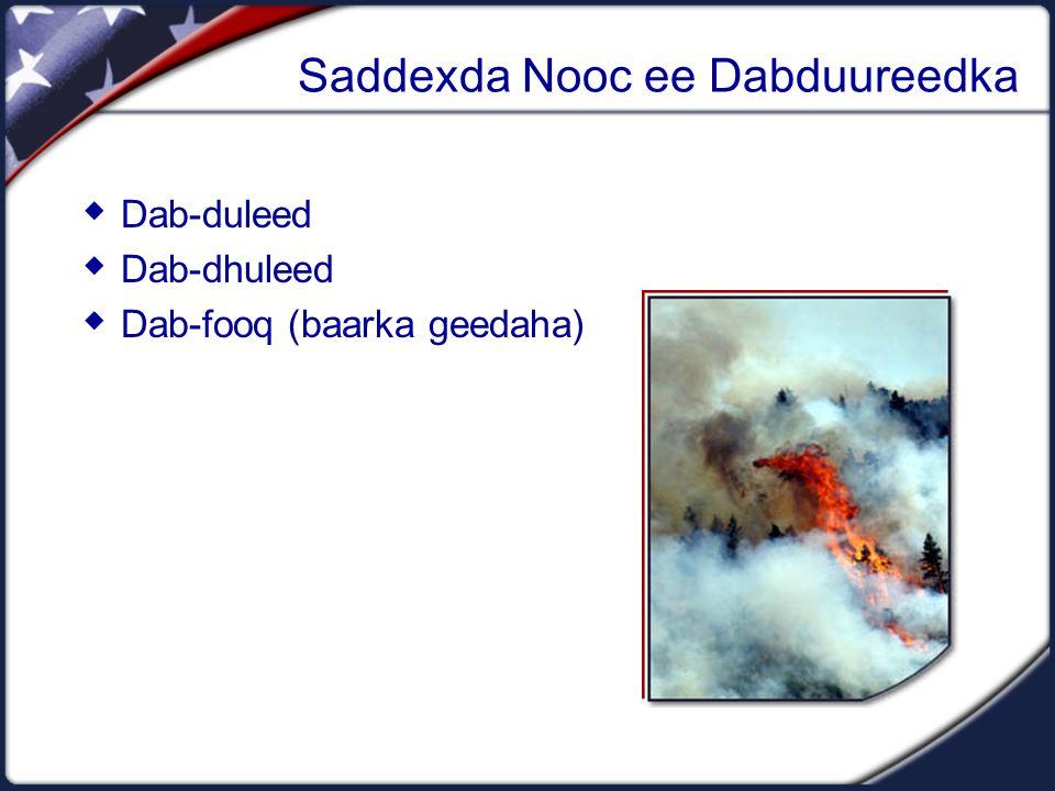 Saddexda Nooc ee Dabduureedka  Dab-duleed  Dab-dhuleed  Dab-fooq (baarka geedaha)