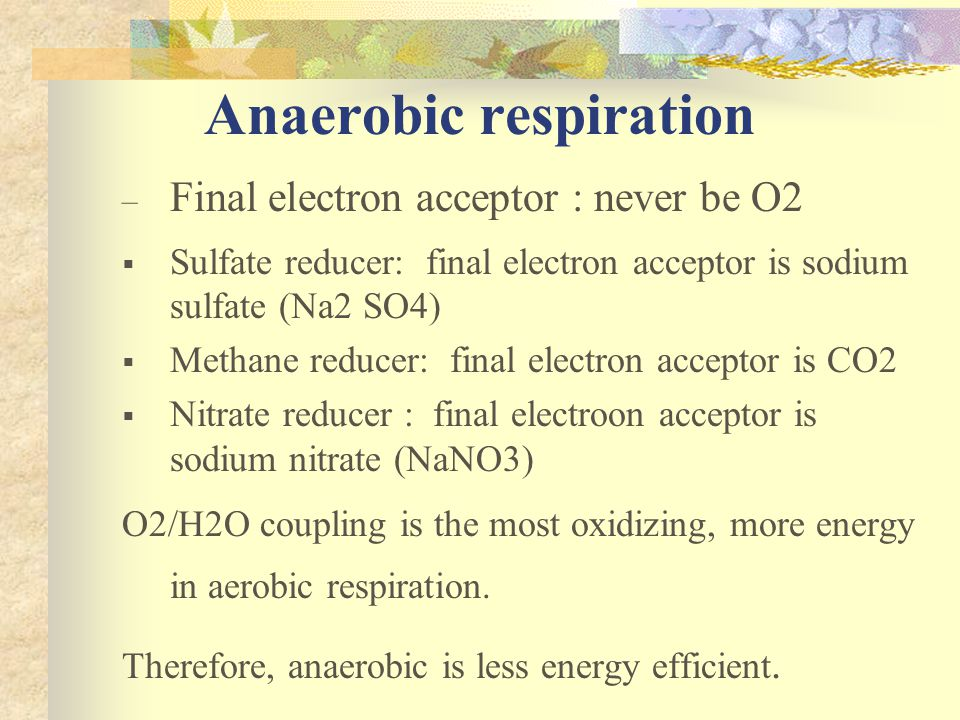 Anaerobic respiration – Final electron acceptor : never be O2  Sulfate reducer: final electron acceptor is sodium sulfate (Na2 SO4)  Methane reducer: final electron acceptor is CO2  Nitrate reducer : final electroon acceptor is sodium nitrate (NaNO3) O2/H2O coupling is the most oxidizing, more energy in aerobic respiration.