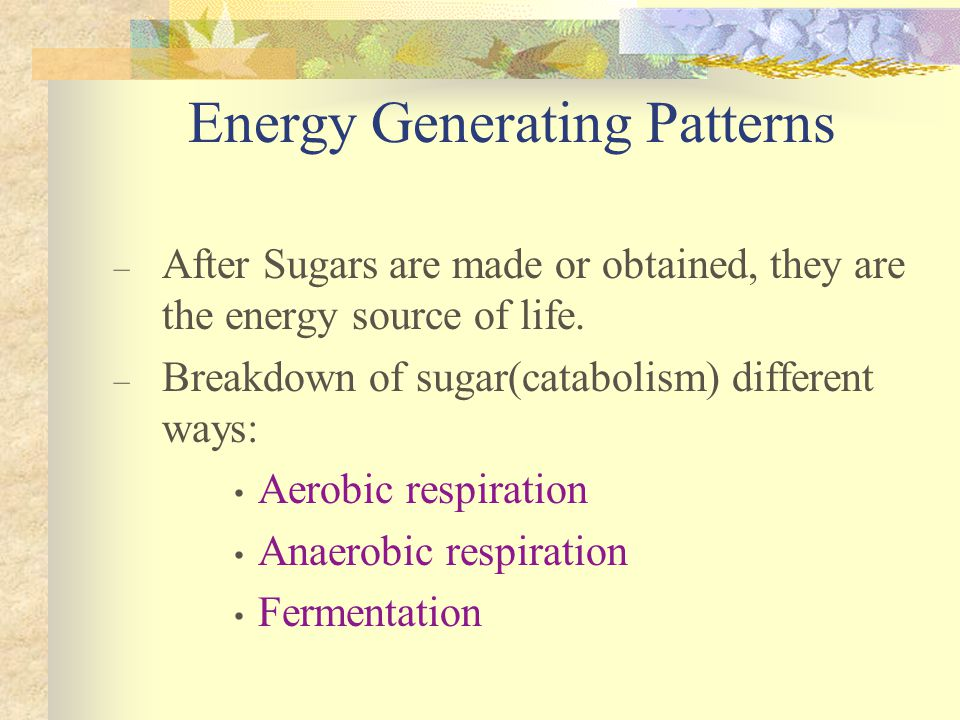 – After Sugars are made or obtained, they are the energy source of life.