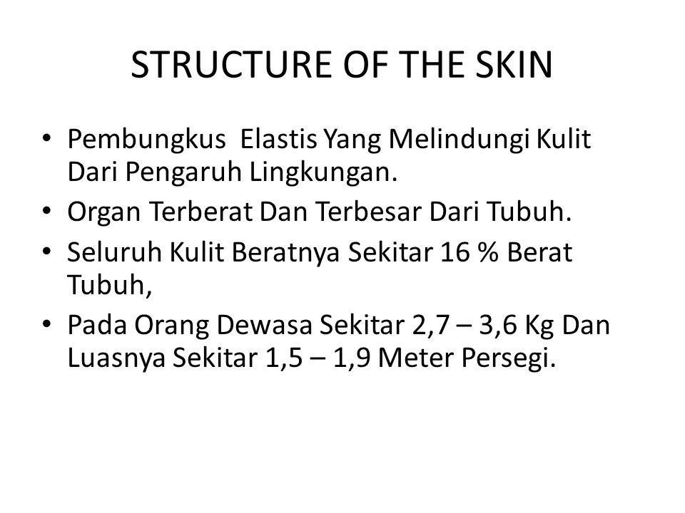 STRUCTURE OF THE SKIN Pembungkus Elastis Yang Melindungi Kulit Dari Pengaruh Lingkungan.