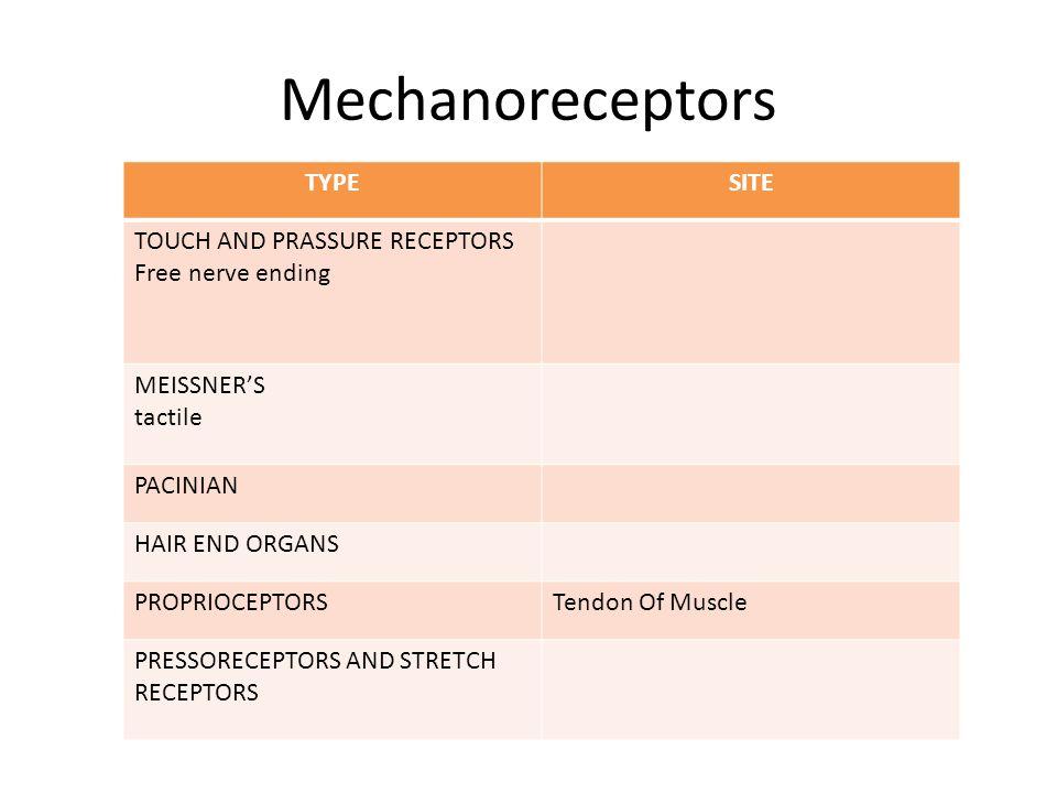 Type of Sensory Receptors Mechanoreceptor Chemoreceptors Thermoreceptor Electromagnetic radiation and pain