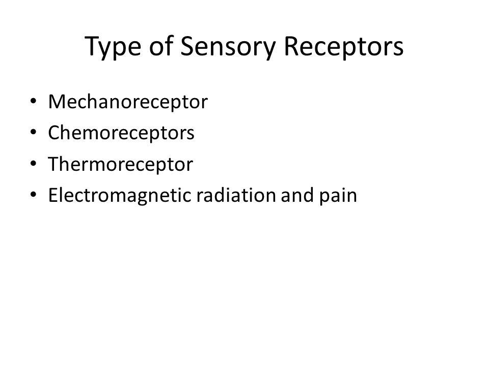 Thermoreceptors Kulit menerima sensasi Dingin dan Panas Suhu akan mengaktifkan Group IIIA Fiber dan C Fiber Spesific receptor Krause untuk panas, Ruffini untuk dingin Temperatur Panas 20-45C, >45C reseptor pain aktif Temperatur Dingin 15-29C,