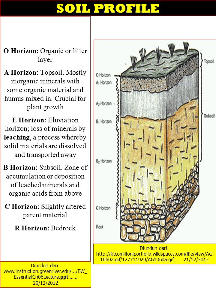 SOIL PROFILE O Horizon: Organic or litter layer A Horizon: Topsoil. Mostly inorganic minerals with some organic material and humus mixed in. Crucial f