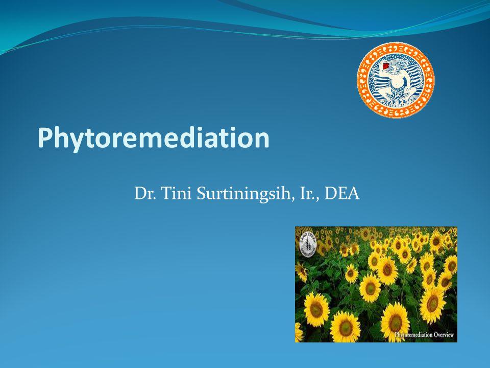 Phytoremediation Dr. Tini Surtiningsih, Ir., DEA