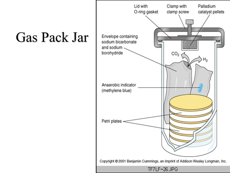 Gas Pack Jar