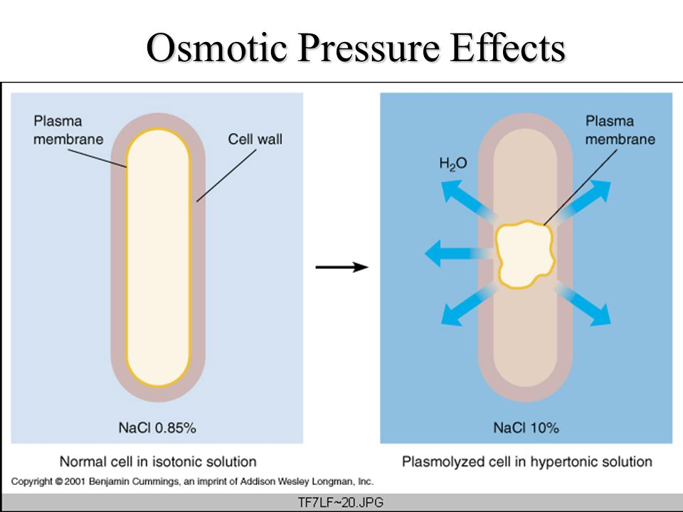 Osmotic Pressure Effects