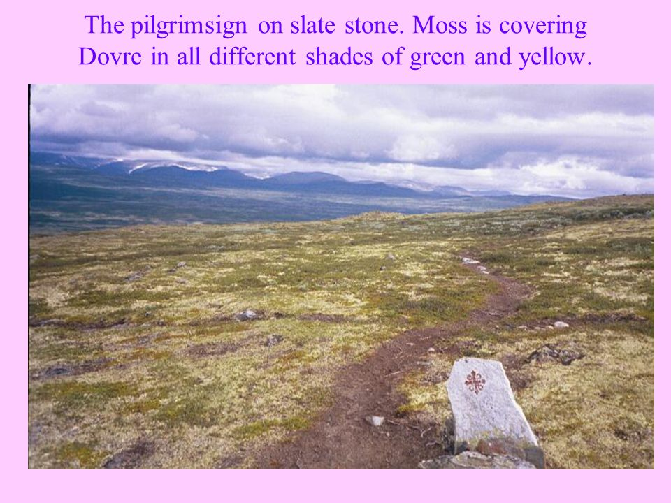 The pilgrimsign on slate stone. Moss is covering Dovre in all different shades of green and yellow.