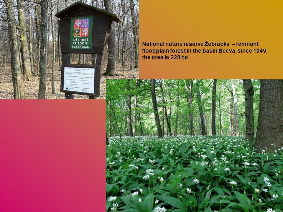 National nature reserve Žebračka – remnant floodplain forest in the basin Bečva, since 1949, the area is 228 ha