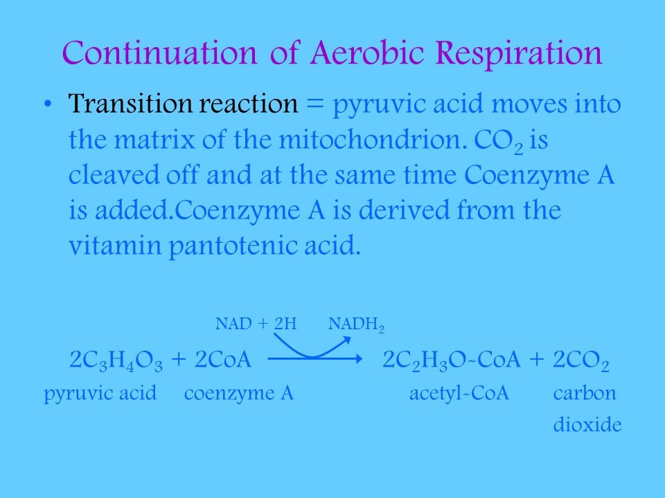 Continuation of Aerobic Respiration Transition reaction = pyruvic acid moves into the matrix of the mitochondrion. CO 2 is cleaved off and at the same