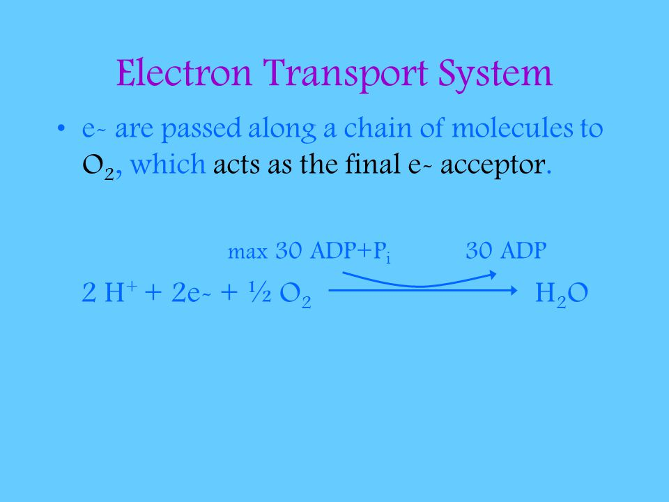 Electron Transport System e- are passed along a chain of molecules to O 2, which acts as the final e- acceptor.