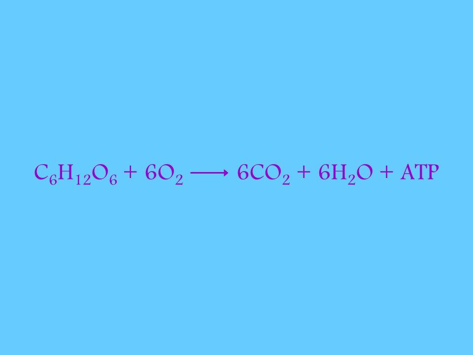 C 6 H 12 O 6 + 6O 2 6CO 2 + 6H 2 O + ATP